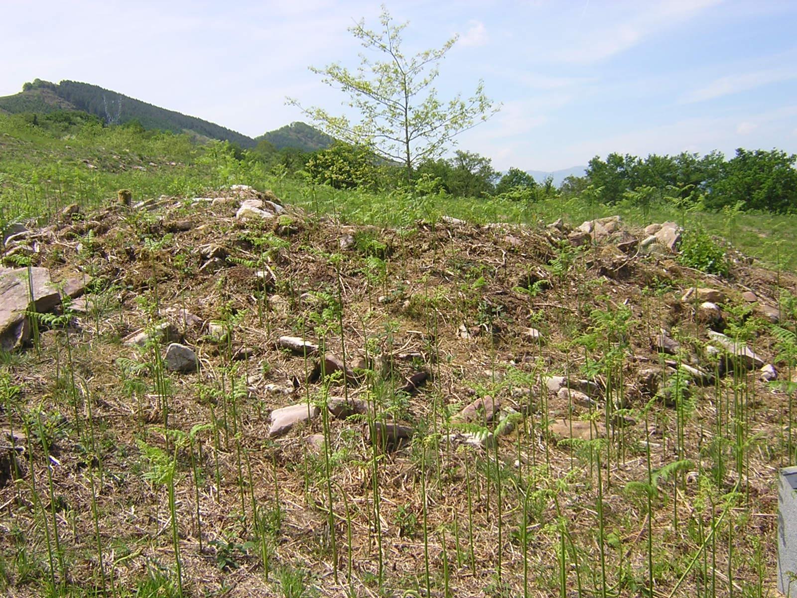 Dolmen Landarbaso 6 Trikuharria